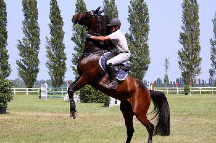Il cavallo che si impenna: le cause