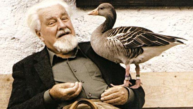 Konrad Lorenz e l'imprinting: Cioc e Martina