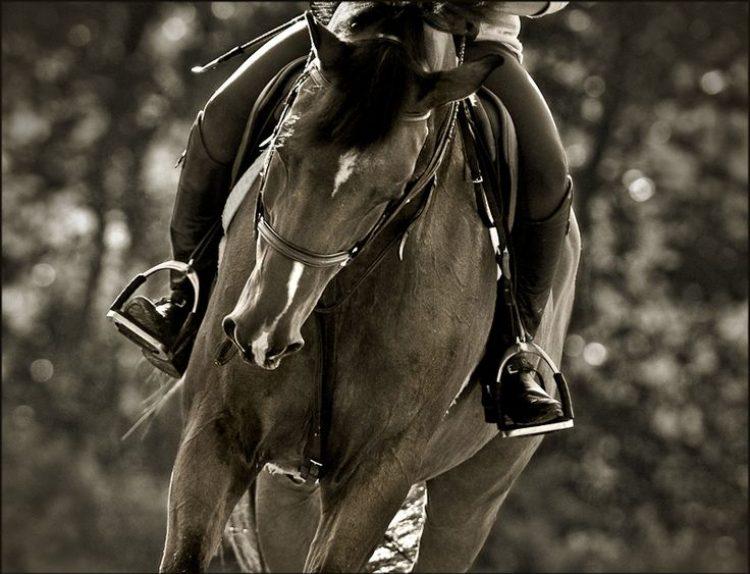 Metodo Feldenkrais®: equilibrio e leggerezza a cavallo