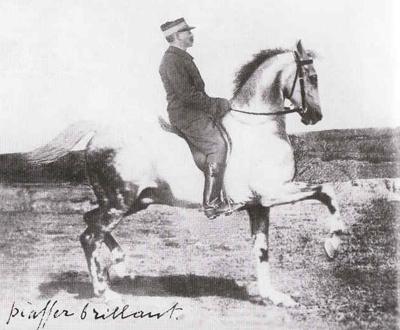 talento equestre