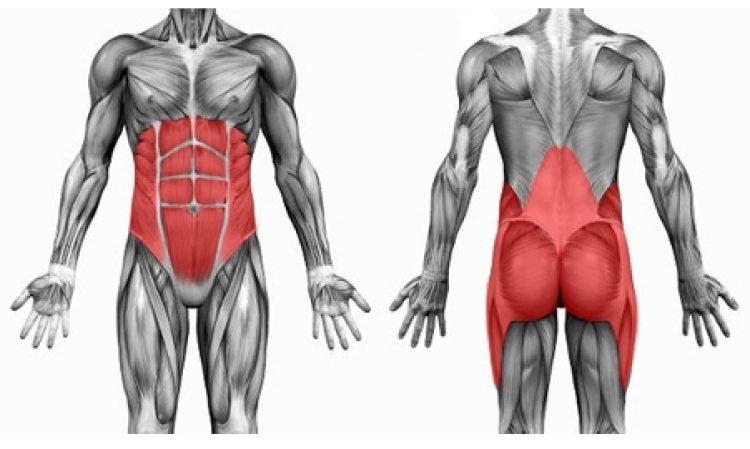 I muscoli dei cavalieri: la regione del tronco
