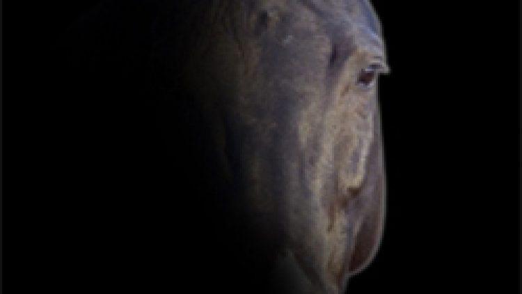 Comprendere il cavallo