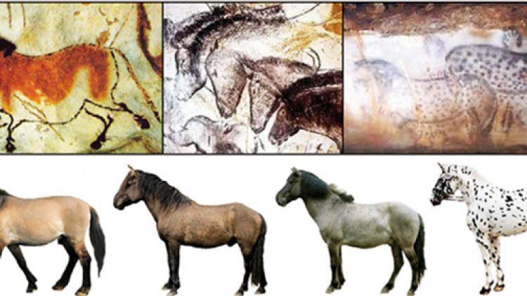 Perché il cavallo fa quello che fa?