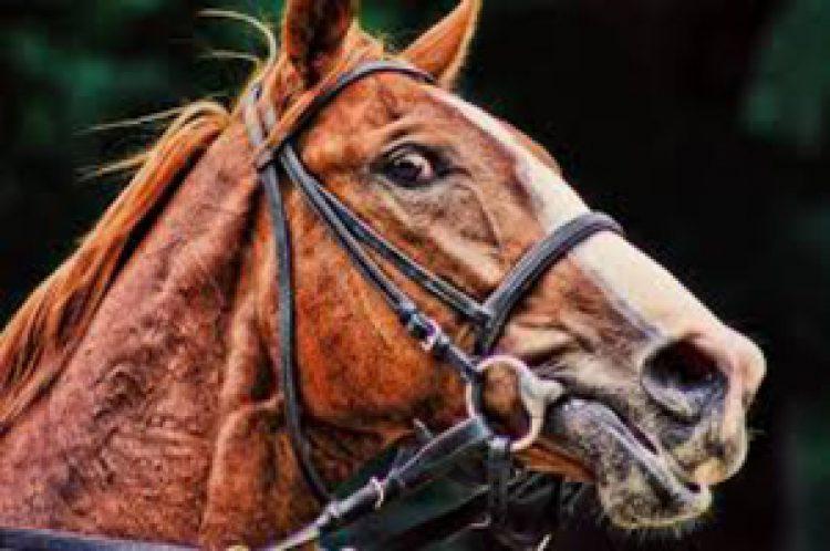 La iper-reattività dei cavalli