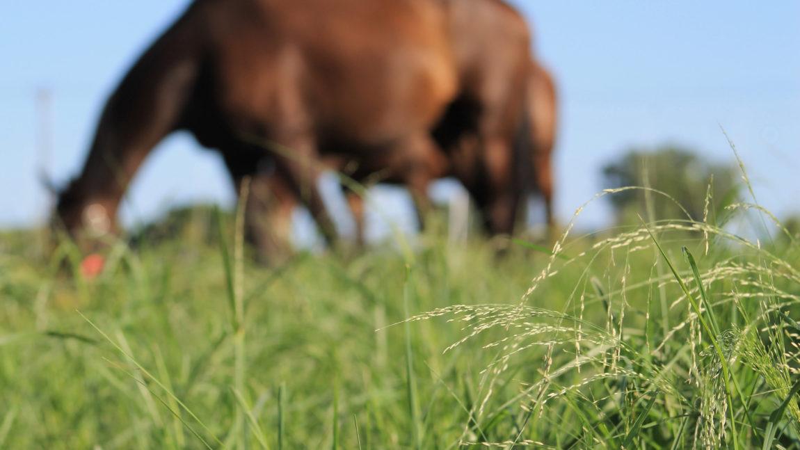 Transizione alimentare: attenti all'erba primaverile