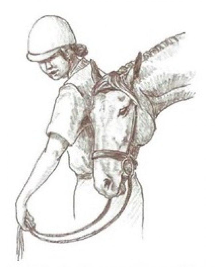 Il cavallo che sfrega la testa contro il suo cavaliere