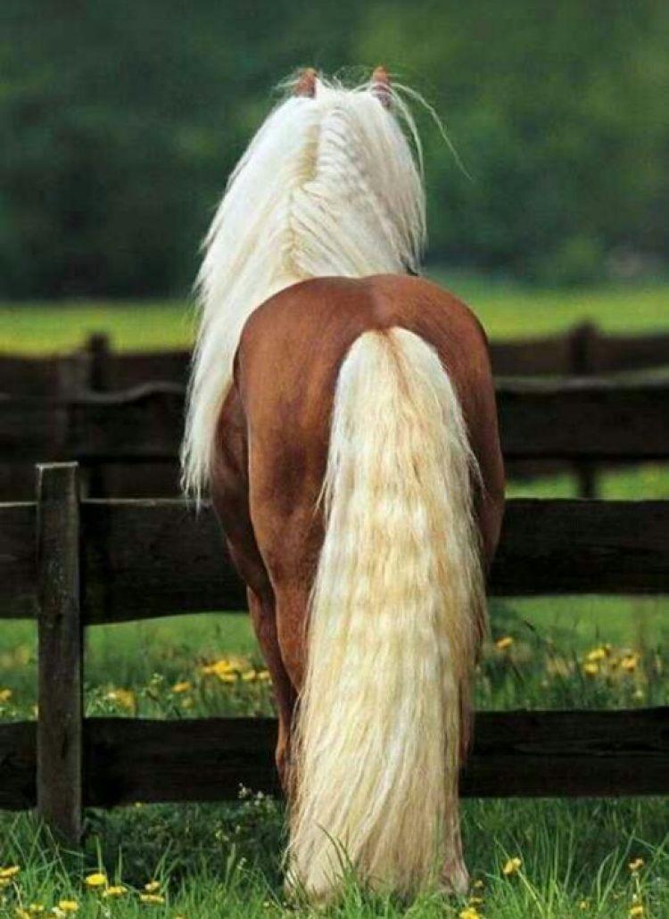 Il coccige del cavallo: una zona da controllare