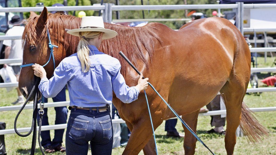 La rivoluzione dell'equitazione e i rinforzi negativi
