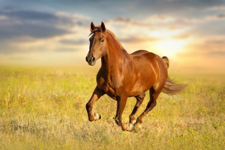 Comprendere quando un cavallo è in forma