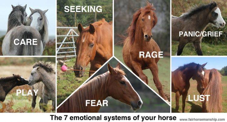 "I sette ""sistemi emotivi"" che regolano le emozioni"