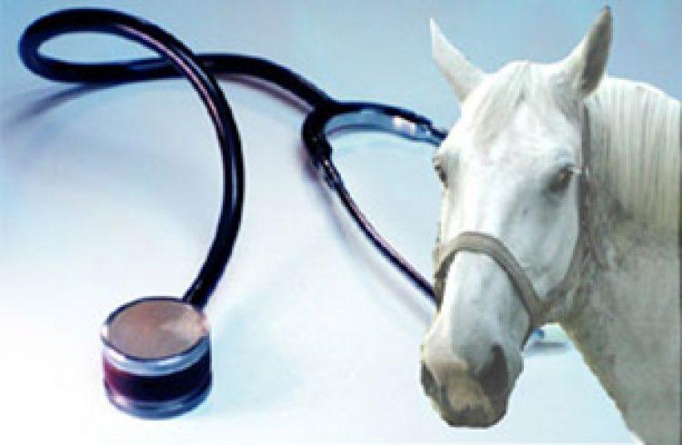 Il ruolo del veterinario nella visita di compravendita