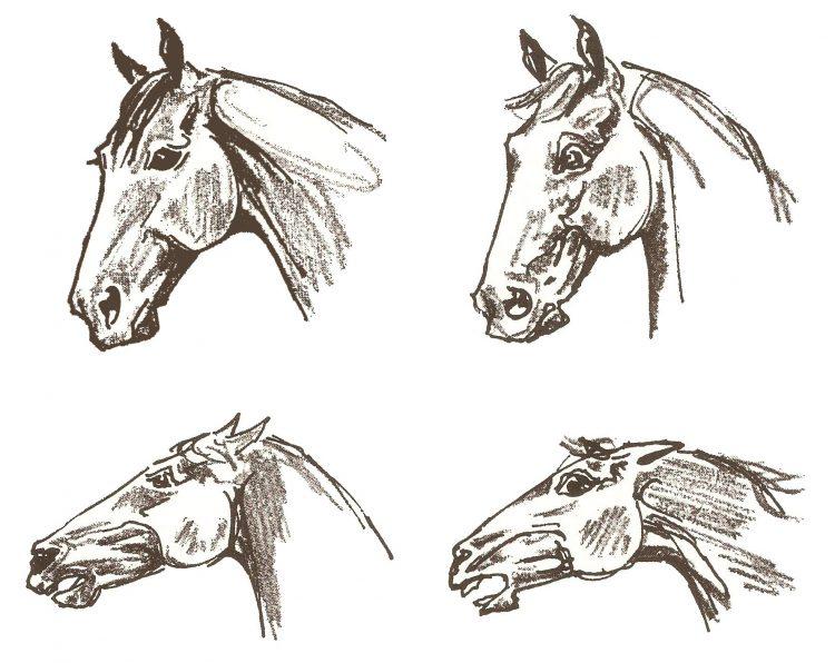 La posizione delle orecchie: molteplici significati