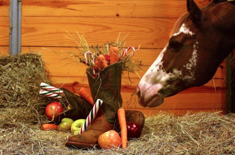 Ecco perché il cibo non vizia i cavalli