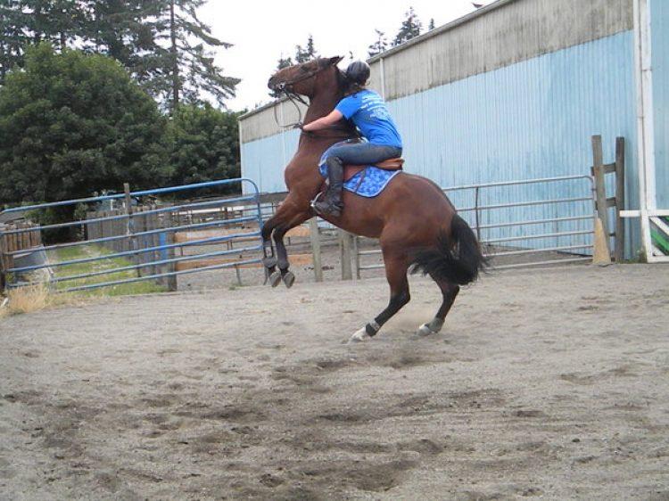 Cosa fare quando il cavallo si impenna