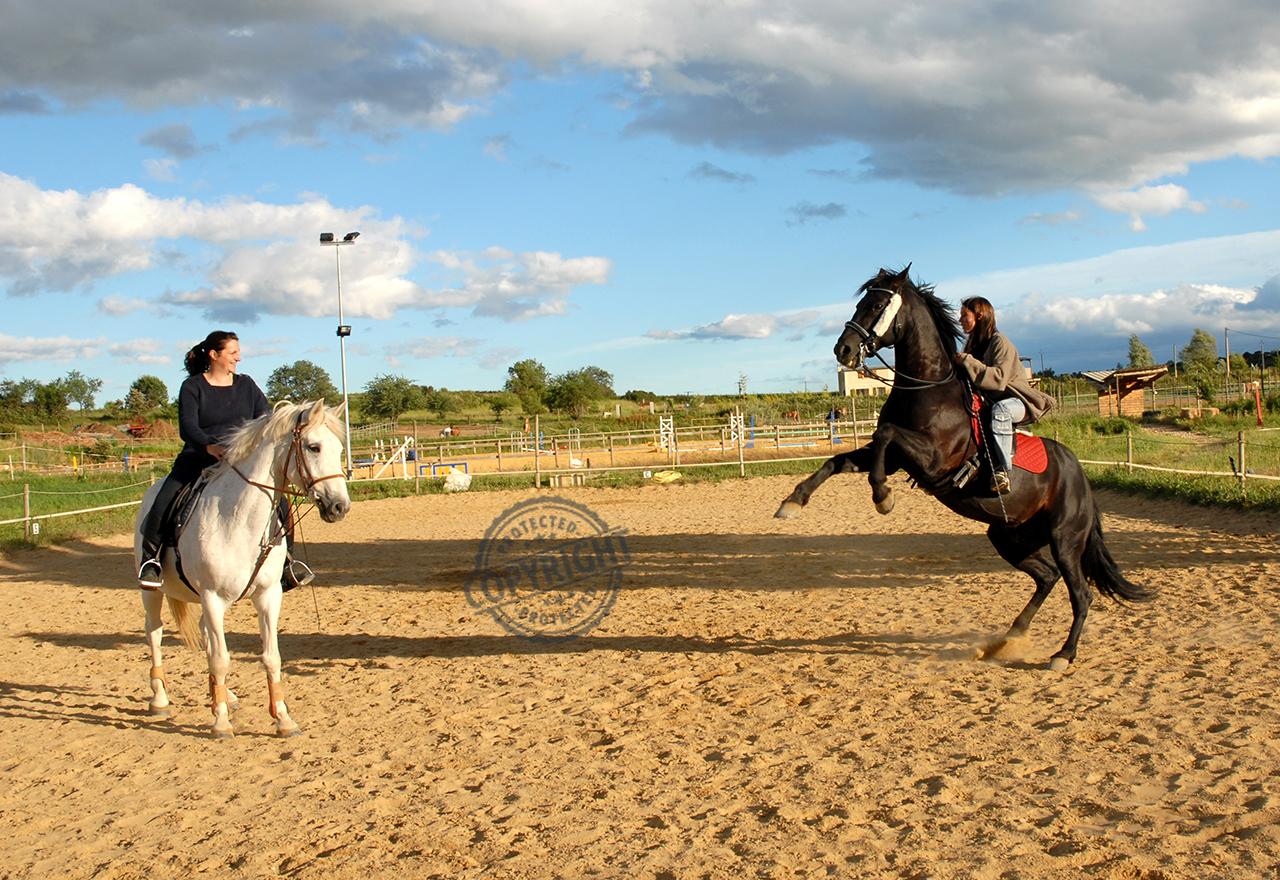 cavallo che si impenna