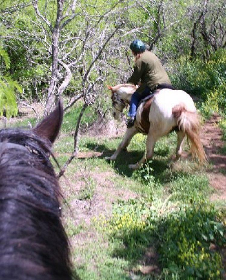 Il cavallo ombroso: cosa fare