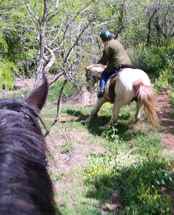 cavallo ombroso