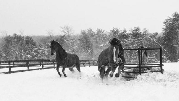 Cavalli all'aperto anche in inverno