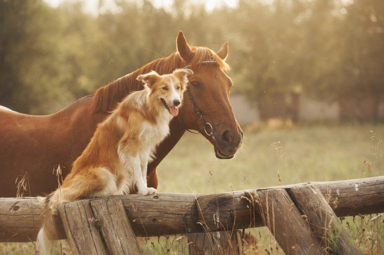 Cavalli e cani, due specie diverse ma simili