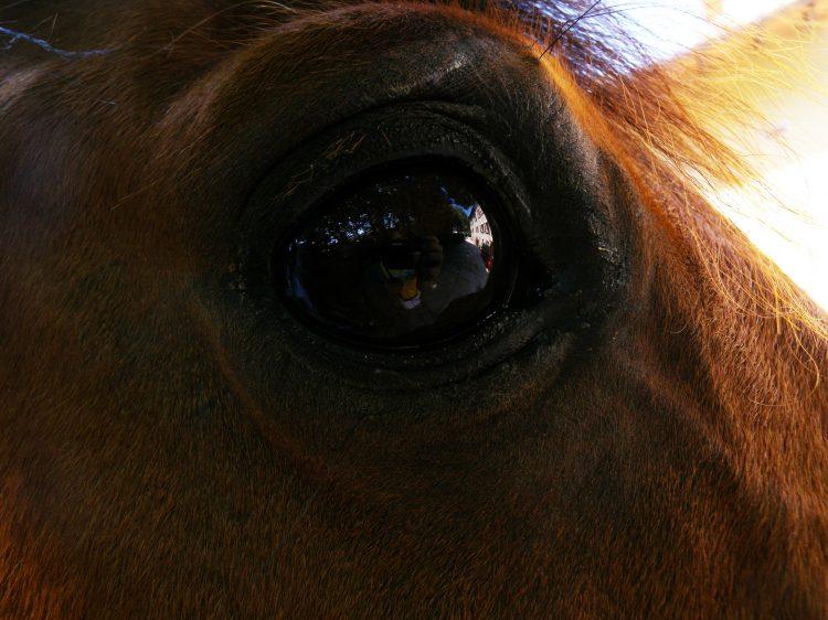 Gli occhi del cavallo trasmettono e recepiscono significati