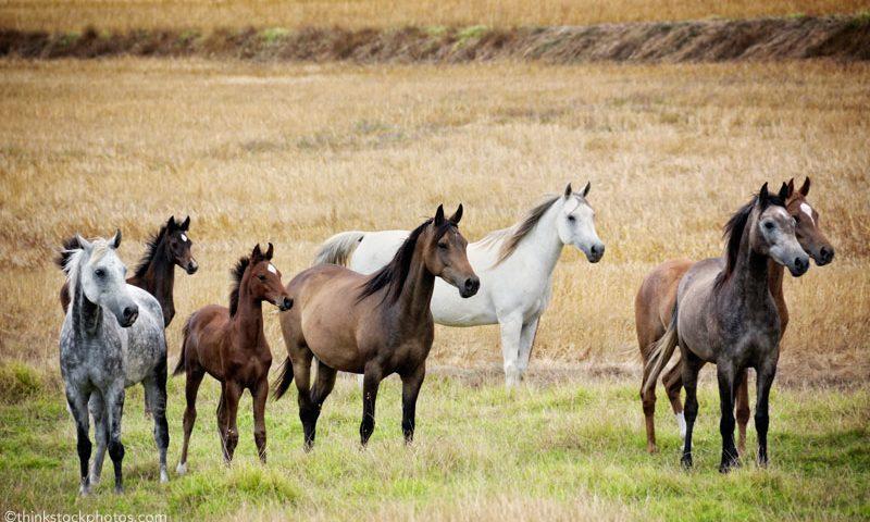 branco di cavalli