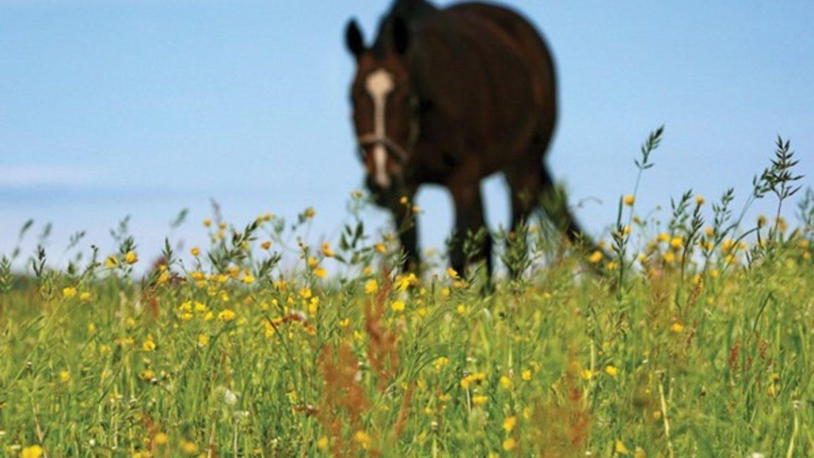 Anche i cavalli sviluppano allergie ai pollini