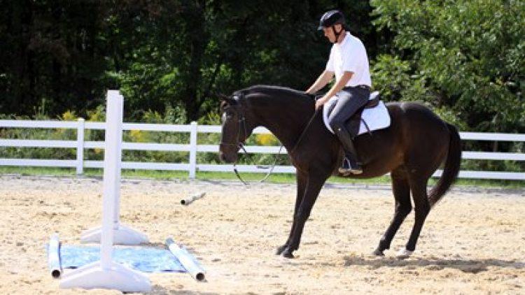 La paura nei cavalli: uno stato emotivo reale