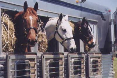 Movimentazione animali e dati di trasporto