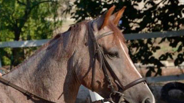 Ottenere e mantenere l'attenzione del cavallo