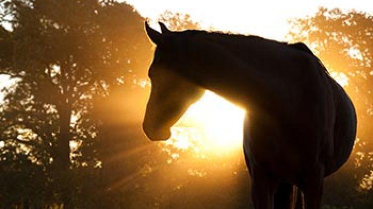 Il sole fa bene alla salute del cavallo