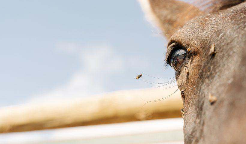 mosche e altri ectoparassiti