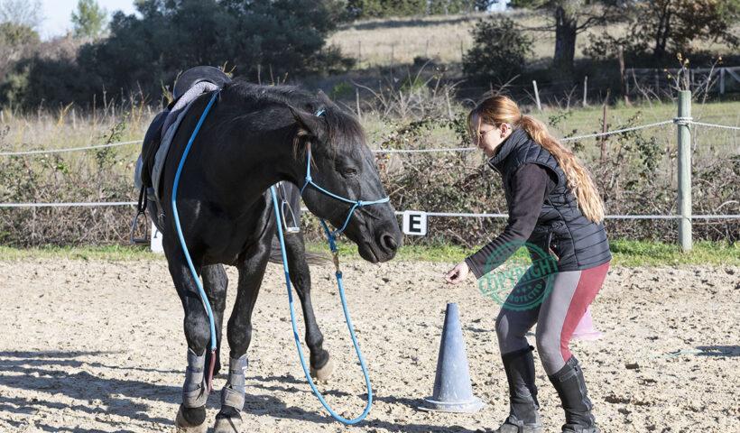 cavalli anziani