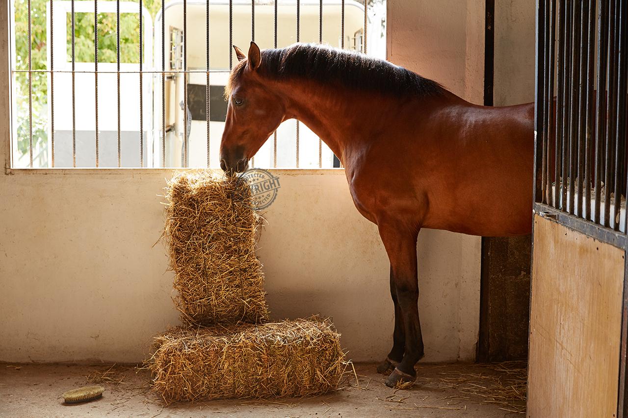 lettiera per cavalli