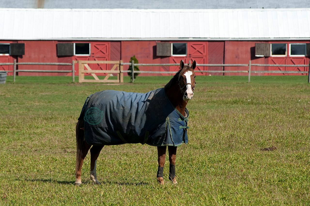 coperta per il cavallo