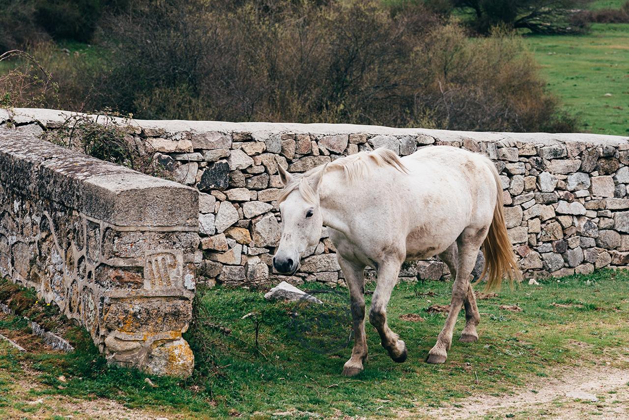 invecchiamento del cavallo