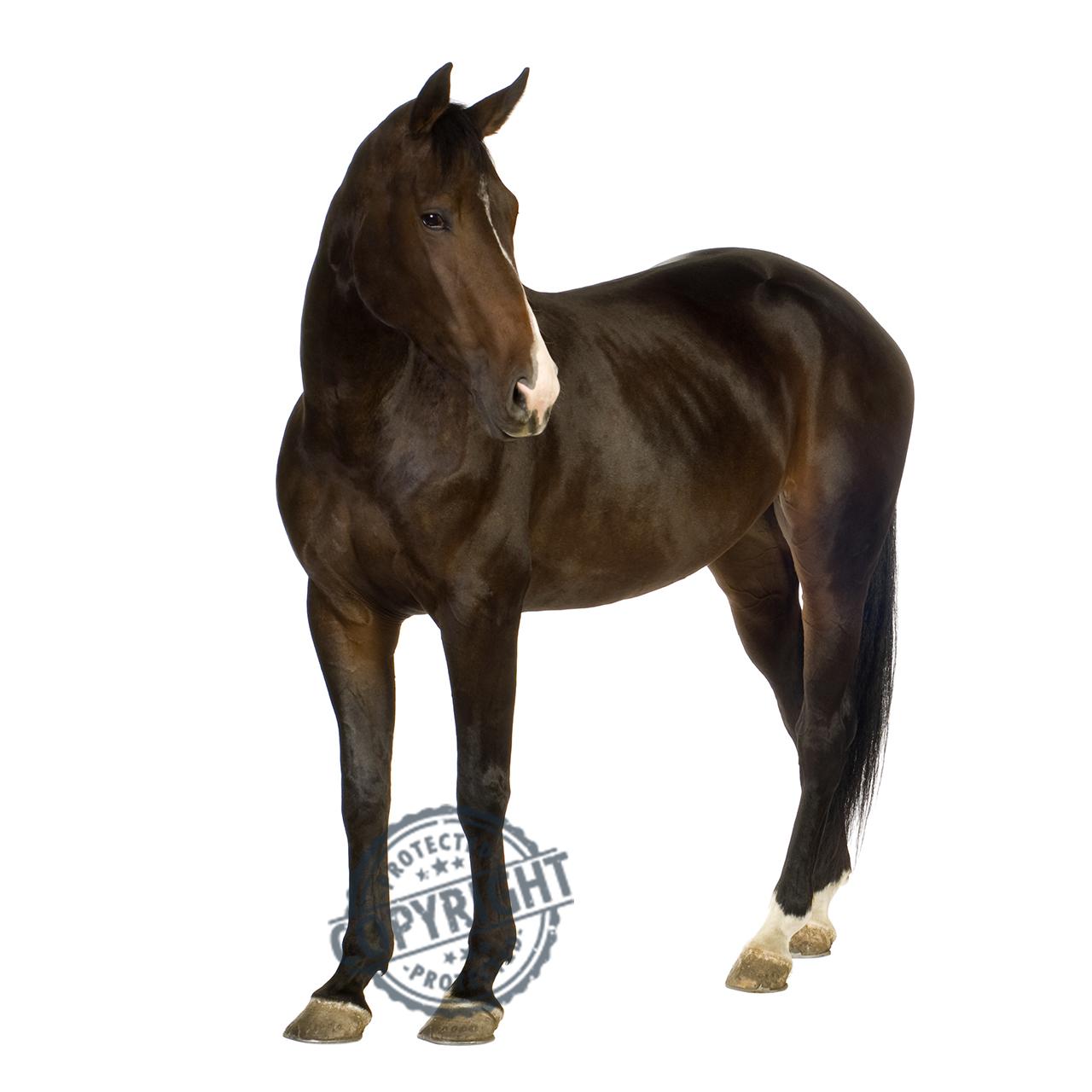tumori del cavallo