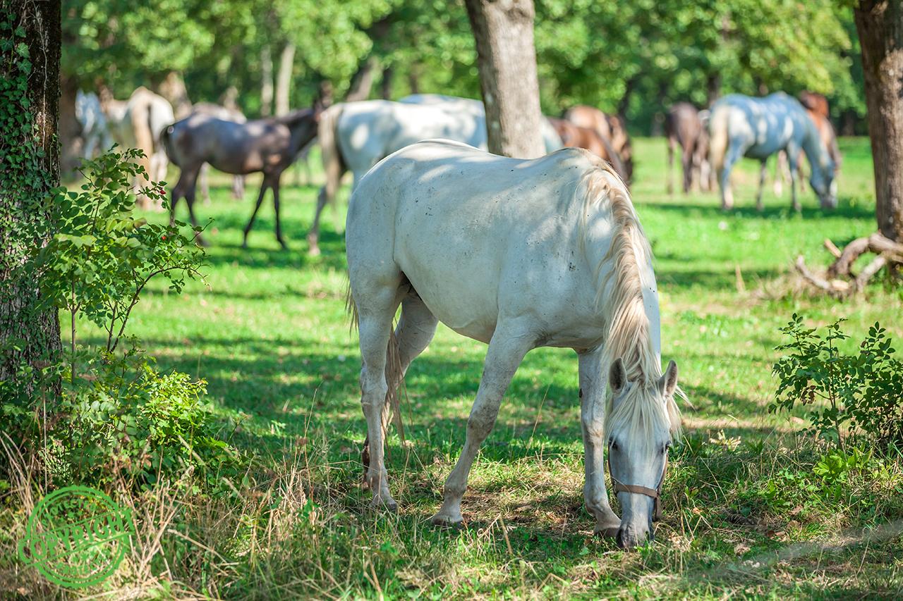 cosa non deve mangiare un cavallo
