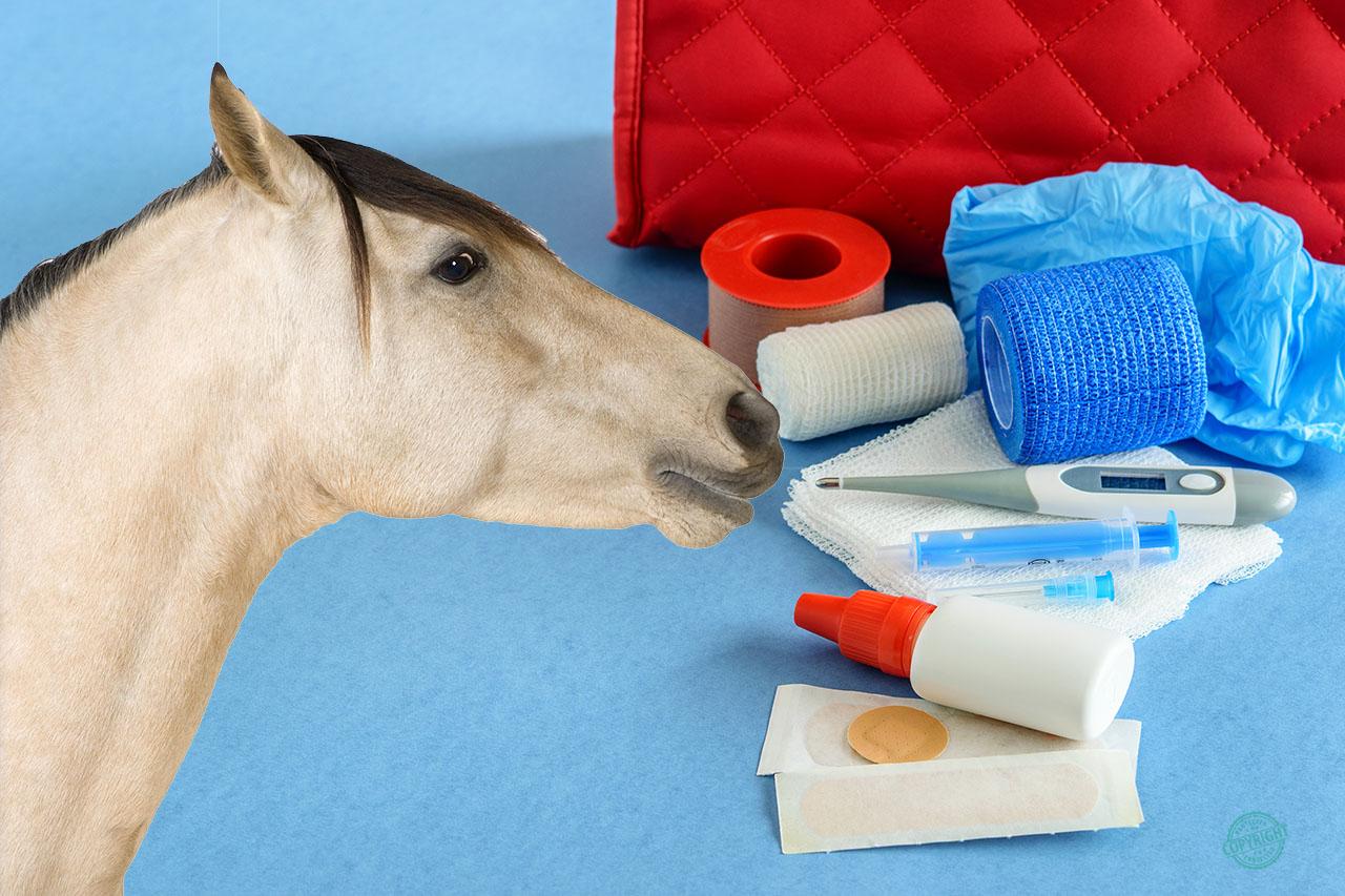 primo soccorso cavallo