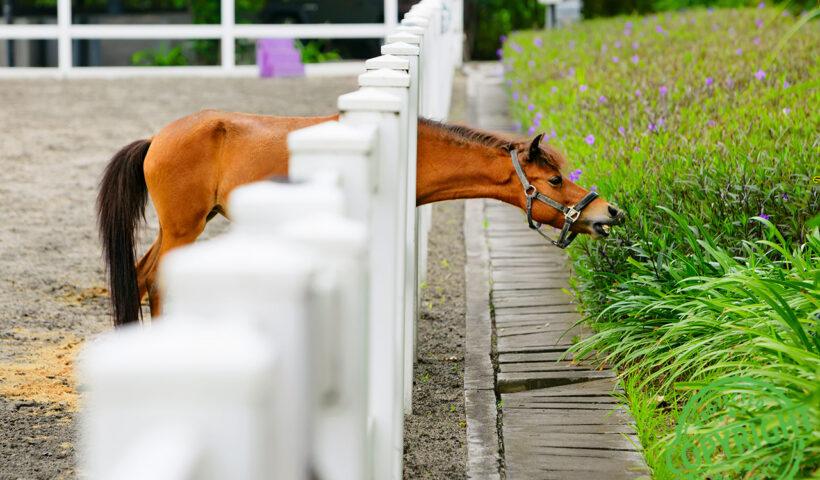 recinti per cavalli