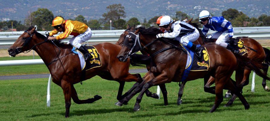 cavallo da corsa