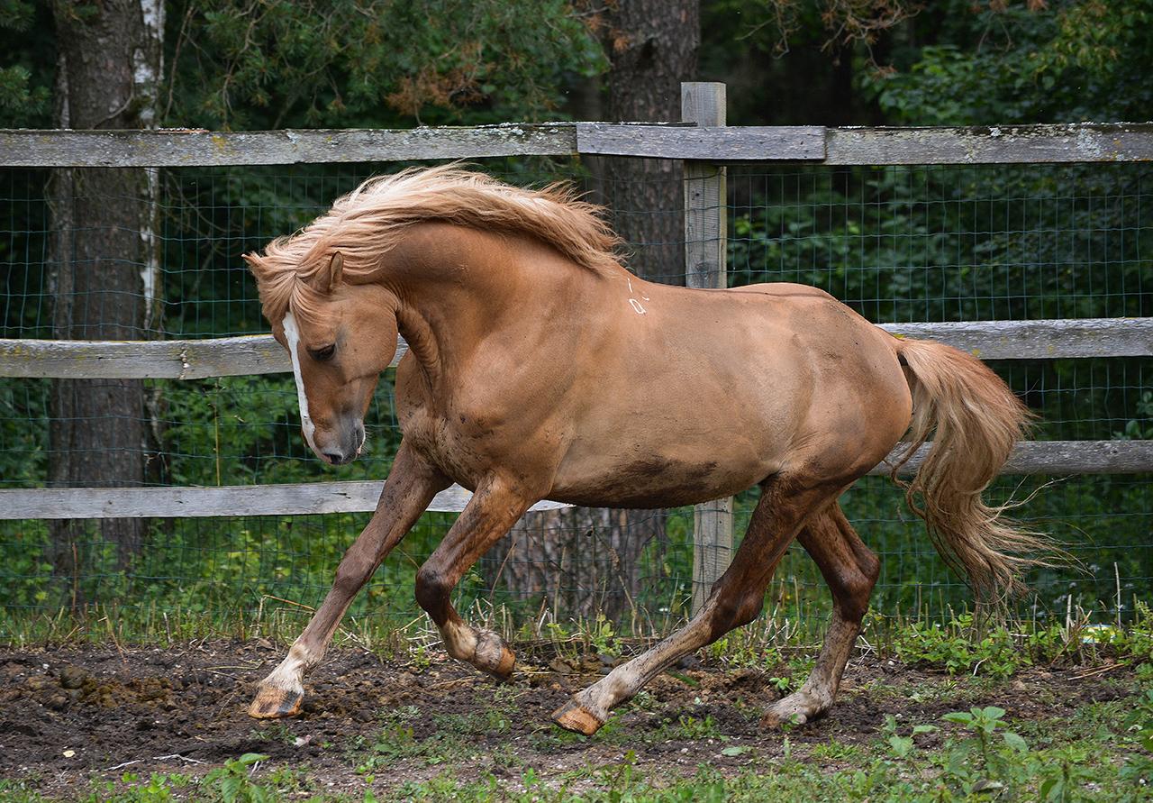 sano come un cavallo