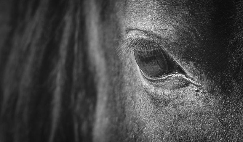 cavalli tuffatori