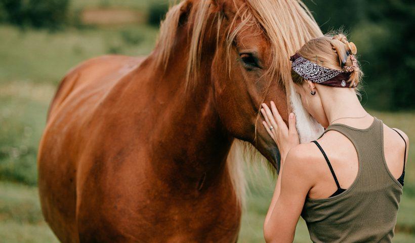 cavallo ferito